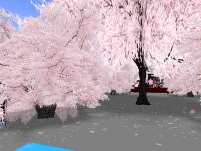桜の大樹2